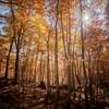 輝く森を歩く