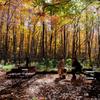 ブナの森カフェ