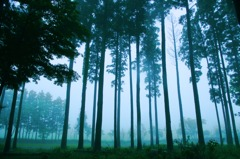 Fog Trees #2