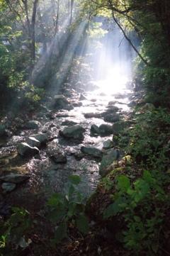 道志の森の朝#1