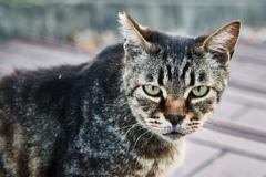 野良猫#1
