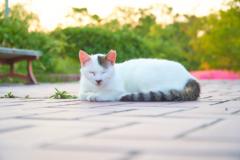 野良猫#2