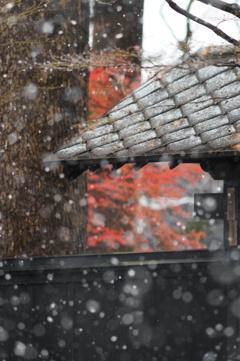 雪と屋根と紅葉と