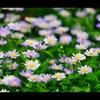 初夏の花3
