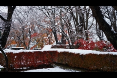 薄まる秋色2