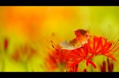 彼岸花に落ち葉