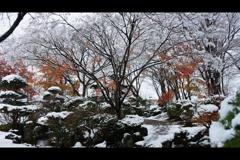 薄まる秋色1