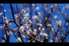 お隣さんにも春
