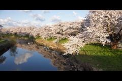 太平川堤防1