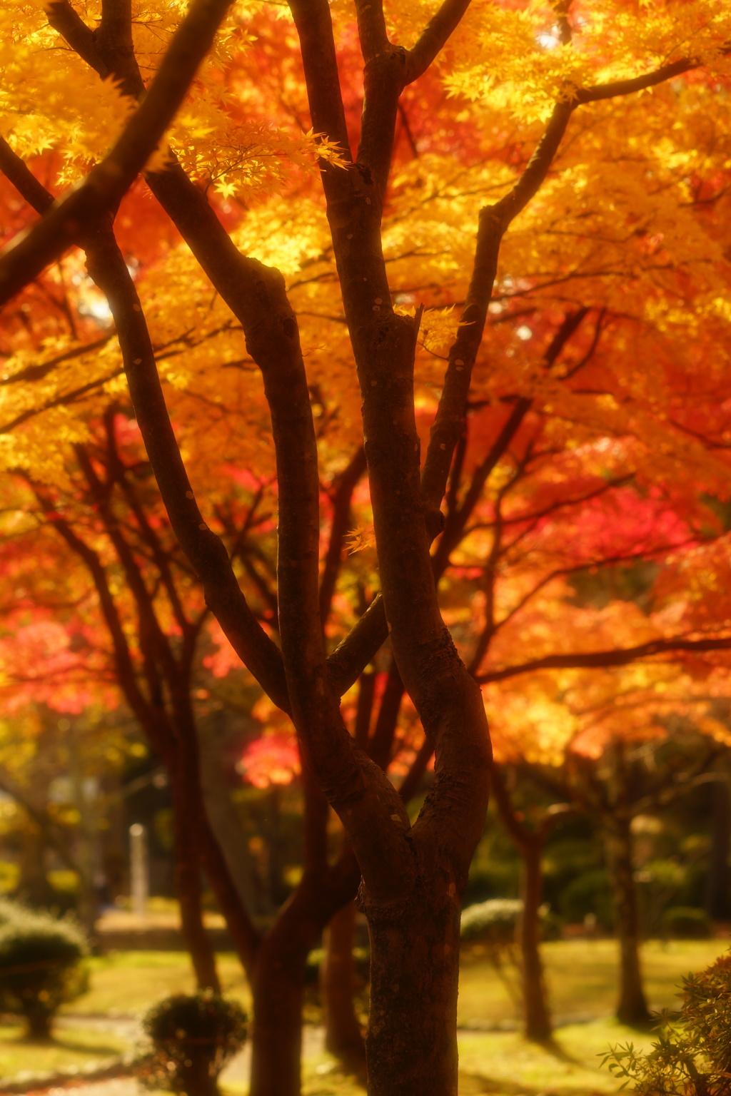 千秋公園5