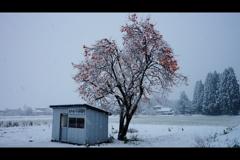 柿の木のあるバス停