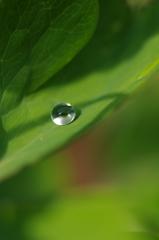 雨上がりの一滴2