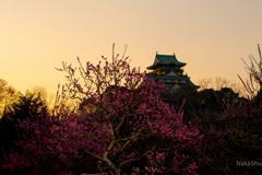 大阪城梅林2