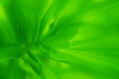 memory of green