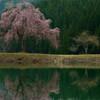 2014.05.03 「田屋の一本桜」