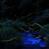 2009.7 「蛍の光」