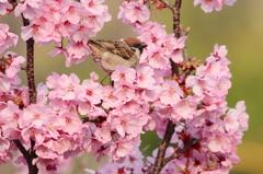 春満喫 1