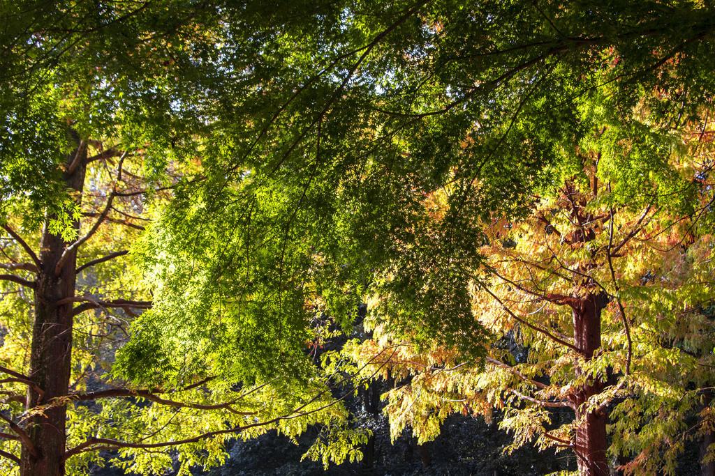 秋の散歩道 09