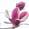 春の大輪 01