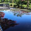 サルスベリ咲く並木道 01