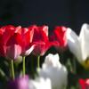 春の花壇 03