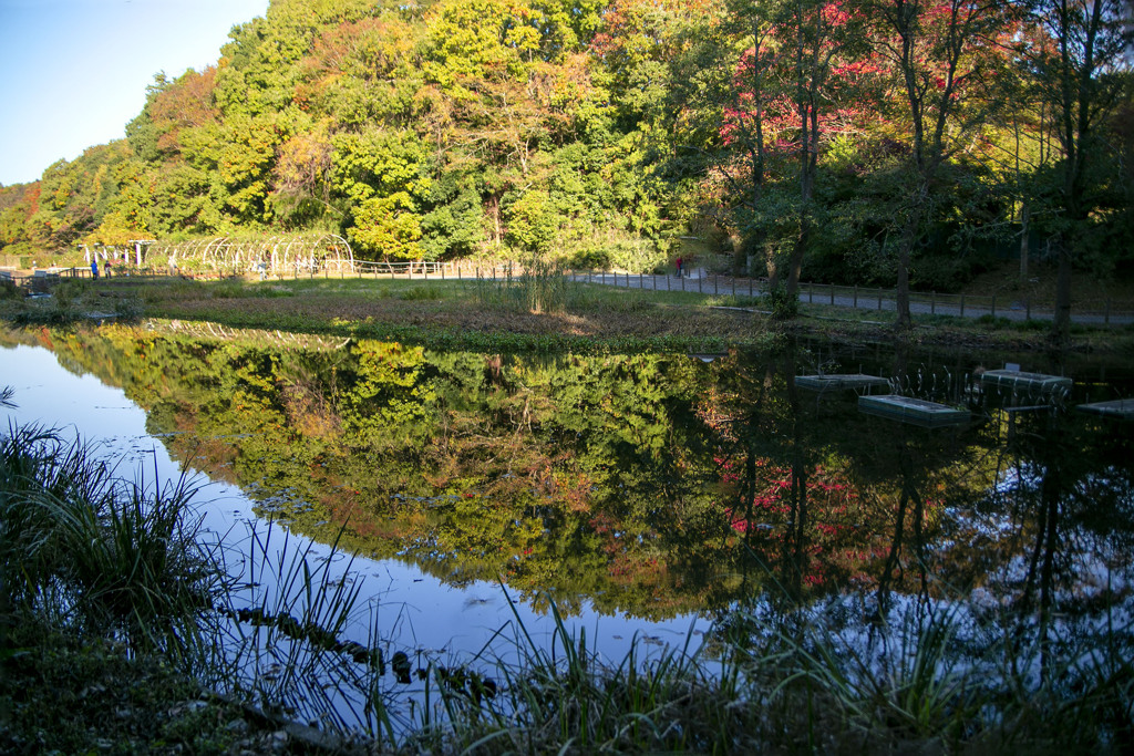 秋の散歩道 11