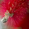 真っ赤なブラシ