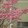 花咲く街角 02