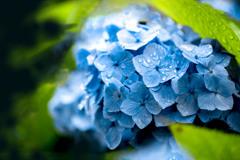 Rainy Blue 02