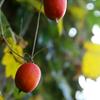 小さな秋の色 01
