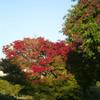 秋の散歩道 07
