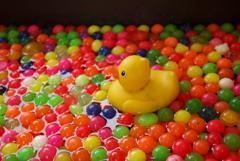 原色のプール