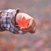 あなたの手