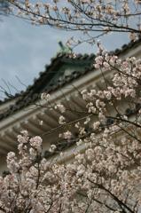 和歌山城と桜