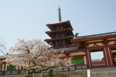 春の四天王寺五重塔