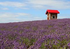 ラベンダーの丘の赤い小屋