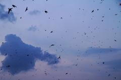 ツバメの集団ネグラⅠ