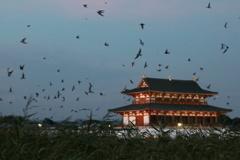 燕の集団ネグラ