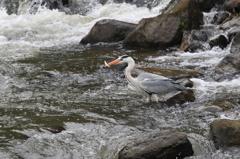 渓流の獲物