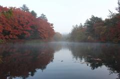 朝霧に煙る雲場池