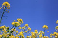 青空と黄色の中で・・・