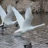 GOHOUDEN-YUUSUITI Runway Takeoff 03