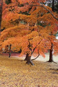 信州上田 真田の秋模様013