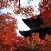 秋の陽に輝く