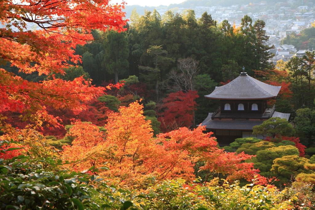 秋色に染まる銀閣寺