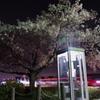 桜も見おさめ