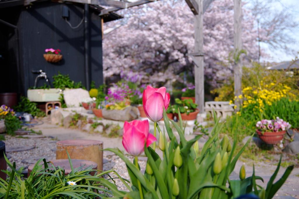 色とりどりの春たち