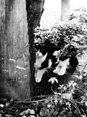 木陰の目撃者