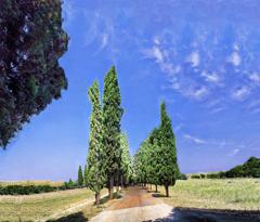 ローマのアッピア街道沿いの木々