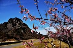 伊豆の国の城山